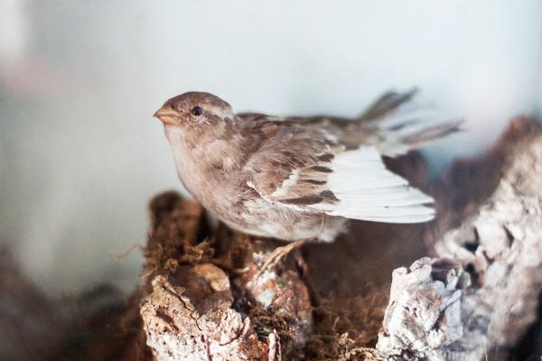 Calke Abbey bird